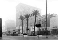 Cort Tower, Three Palm Trees, Fog